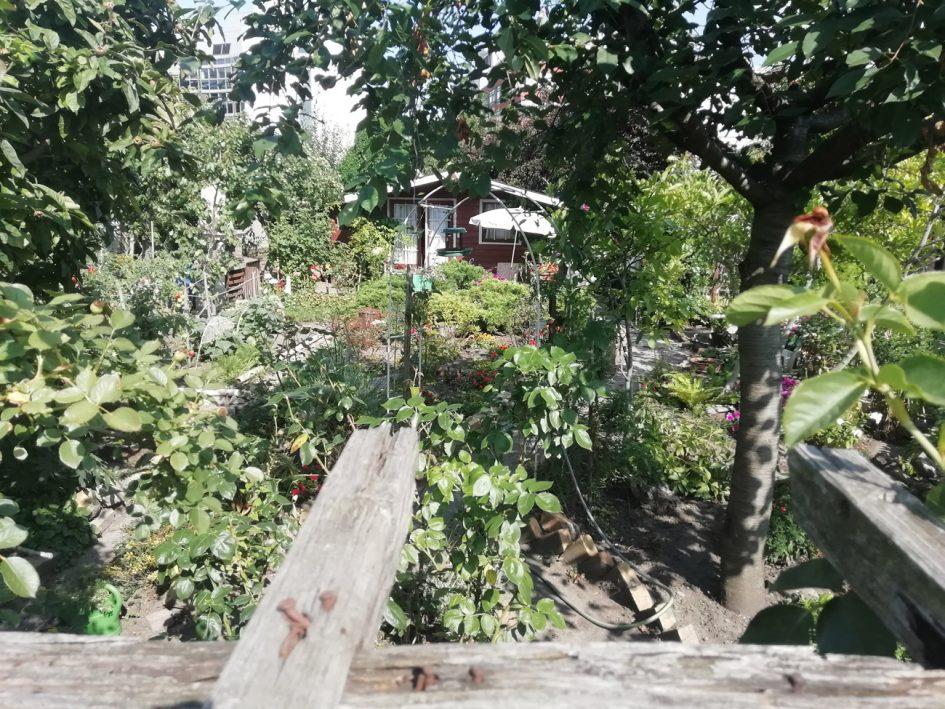Garten 154
